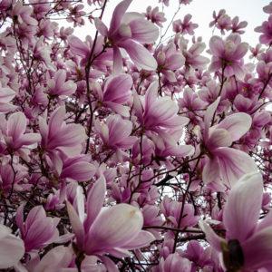 x-2009-flowers-1