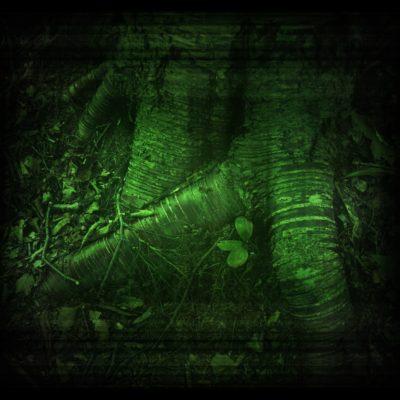 ekoplex-creatures-of-the-forest-8